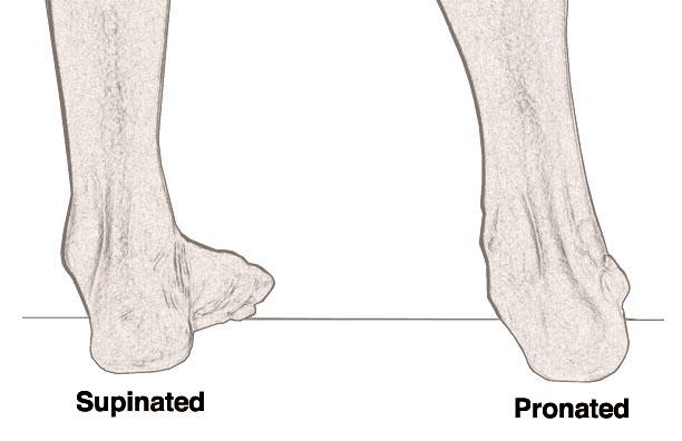 pronation vs supination of foot - klejonka, Human body