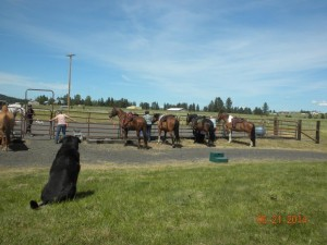 Horse training clinics