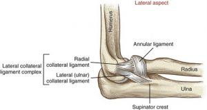 lateral collateral ligaments of elbow